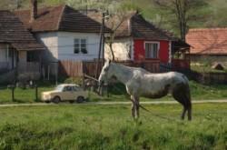 Árok partján legelésző ló. A földúton öreg trabant poroszkál. A faléces kerítések mögött hol fehér, hol színes ház látható.